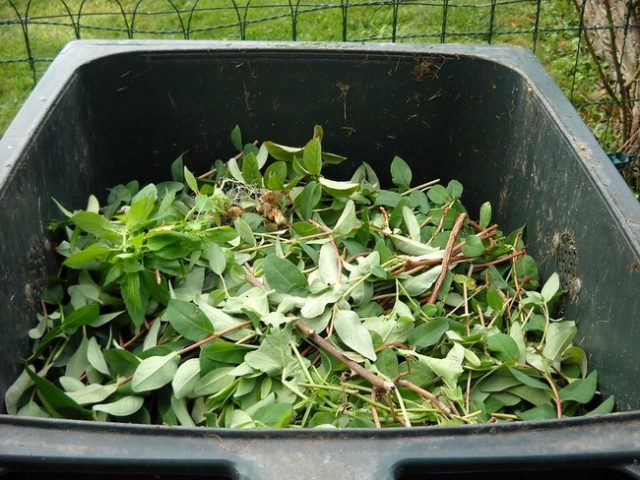 Finding Good Carbon Sources For Your Compost Pile