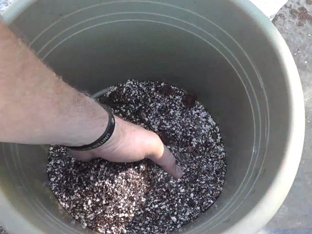 Make Your Own Soil-less Seed Starting Mix