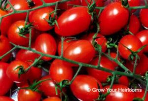 Cherry/Grape Tomatoes